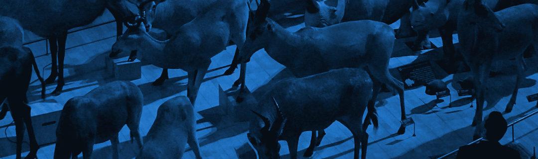 L'enjeu de l'éclairage dans un projet d'exposition